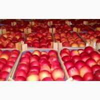 Продажа яблок из холодильника