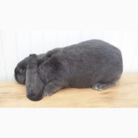 Продам кролі