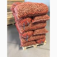 Продам грецкий орех (Walnut)