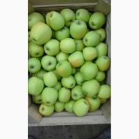 Продам яблоки Семиренко