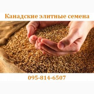 Семена озимой пшеницы – Озимый элитный канадский сорт CANMOR