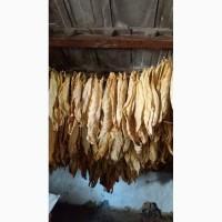 Продам сухе листя тютюну