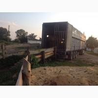 Услуги скотовоза, перевозка животных, грузоперевозки