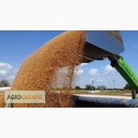 Услуги зерновоза для перевозки зерна пшеницы, кукурузы, овса по всей теретории Украины