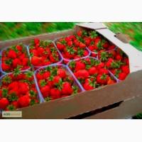 Лоток под клубнику, Гофролоток под ягоды в пинетках