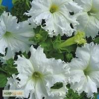 Продам семена Петуния крупноцветковая бахромчатая Крайкови Завой F1