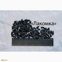 Семена кондитерского подсолнечника сорта Лакомка от производителя