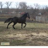 Продам хороших пародистых лошадей в заботливые руки