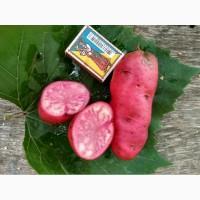 Картофель All red (Cranberry Red)