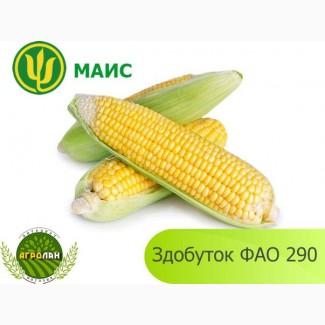 Продам гібрид кукурузи ЗДОБУТОК (МАЇС)