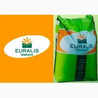 Продам гібрид кукурудзи ЕС БОМБАСТІК