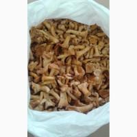 Продам гриби Лисички