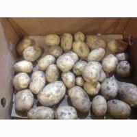 Продам товарный картофель 5грн за 1кг