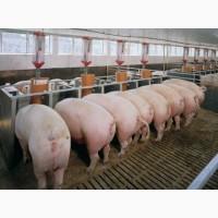 БМВД Feedline фініш 12% для свиней від 60 до 115 кг м. Львів