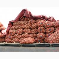 Продам картошку Белароса