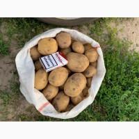 Продам картофель сорт Ривьера, Херсонская обл