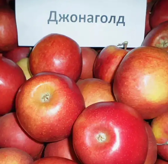 Продам яблоки разных сортов оптом и в розницу, Черкасская обл.