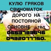 Куплю Хрякив Свыноматк