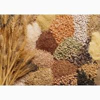 Купую пшеницю, ячмінь, сою, кукурудзу