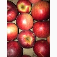 Вкуснейшие, сочные яблоки с островов Вилково. Айва, Груша, Калина, Виноград Новак