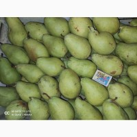 Продам грушу Бере Київська і Кюре. Черкаська область