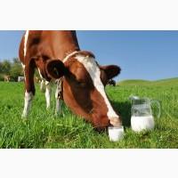 Домашнє коров#039;яче молоко з власної ферми