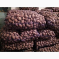 Продам товарный картофель сорт Словянка