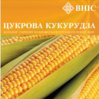 Суперновинки на кукурузному ринку України – надцукрові гібриди кукурудзи