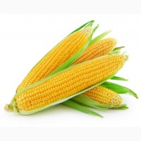 Куплю кукурудза