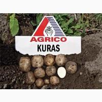 Картофель на посадку с фермерского хозяйства оптом, 10 сортов