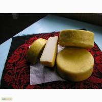 Сыр козий пармезан самый целебный органический в Украине -пища богов и долгожителей