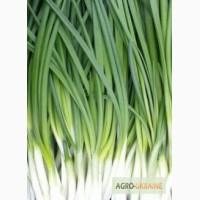 Продам зеленый лук Харьков