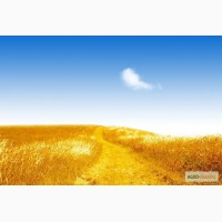 Трейдерская компания Восток-Агро закупает Пшеницу 2 - 6 класс.Ячмень