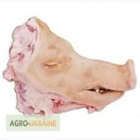 Головы свиные без баков, без ушей, ошпаренные замороженные
