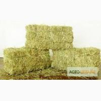 Оптовая продажа лугового сена, люцерны с доставкой по Украине