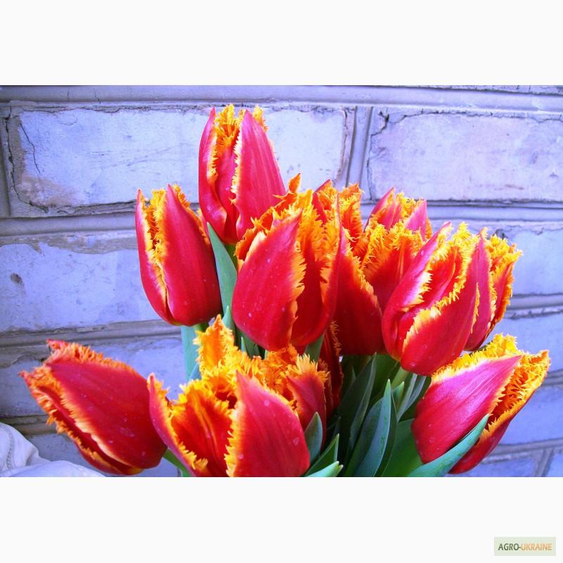 Цветы опт к 8 марта украина подарок мужчине-летчику на день рождения