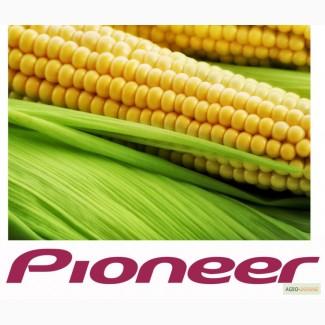 Семена кукурузы Pioneer различных гибридов