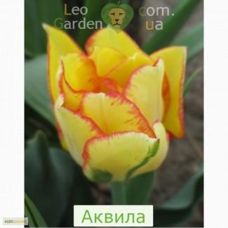Тюльпаны, гиацинты, нарциссы, мускари, крокусы, ирисы, лилии-дёшево