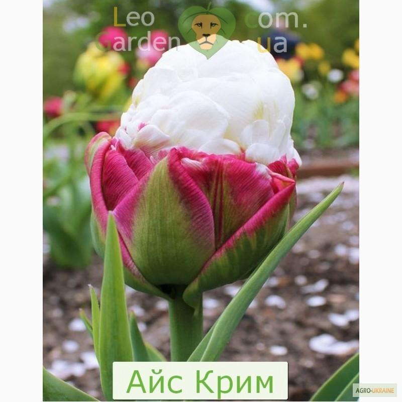 Розы нью джерси каталог на осень