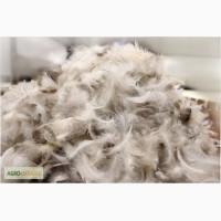 Продам перья гусиные