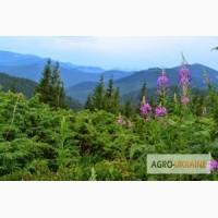 Тур на Закарпатье на майские праздники, Долина нарциссов, Косино, Лумшоры