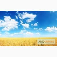 Купим пшеницу фуражную и классовую по всей Украине