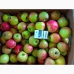 Продам яблоки ндс и нал