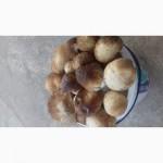 Продам гриби сушені 2018 року. Є в наявності і свіжі гриби з лісу