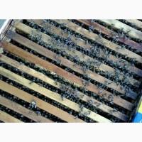Продам бджолосімї, бджоли, пасіка