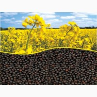 Продам Рапс Канадской селекции, насіння ріпаку
