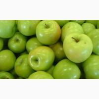 Продам найкрасивіші яблука Гренні Сміт! Дуже великі, сочні та красиві