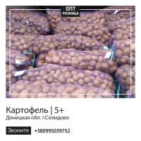 Картофель | Продажа картошки | ОПТ/Розница