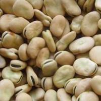 Продам раній сорт бобів