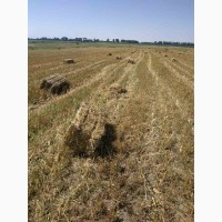 Продам солому урожая 2021